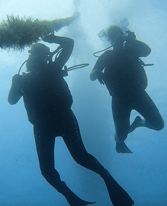 Plongeurs Nahoon