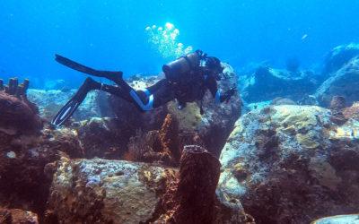 Faire de la plongée à l'Arbre Mort