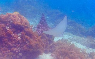 Faire de la plongée à la Petite Sirène