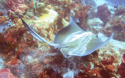 Faire de la plongée au Tombant des Anses