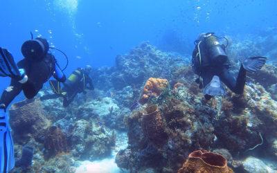 Diving in the Jorasses